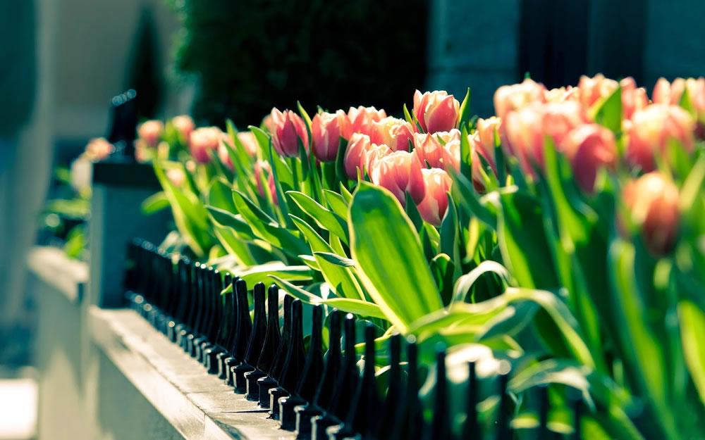 Garden arrangements - DEMO
